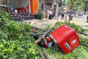 Nhánh cây cổ thụ bất ngờ gẫy, rơi trúng người đi đường
