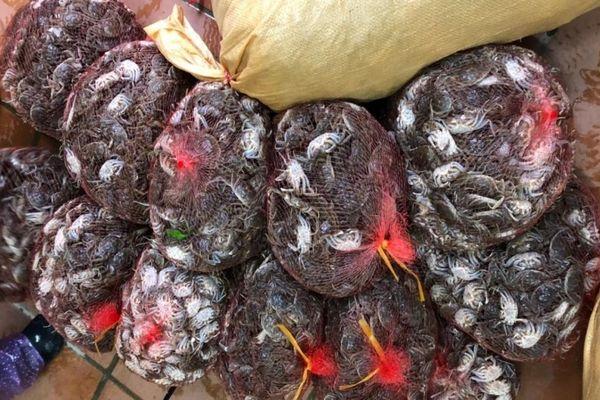 Quảng Ninh: Hơn 100 kg Cà ra nhập lậu từ Trung Quốc bị phát hiện