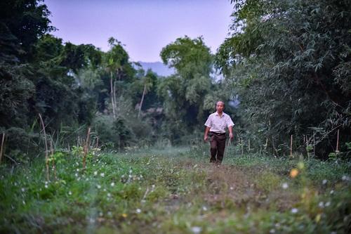 Người đàn ông 'chăn' đàn cò hàng vạn con ở Thanh Hóa Ảnh 1