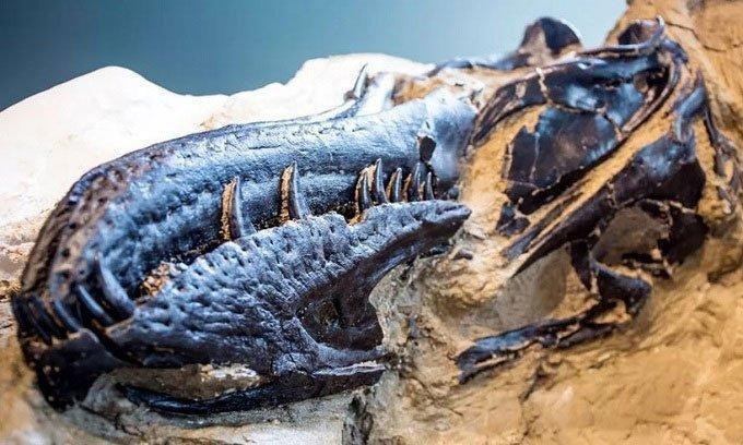 Tìm thấy cặp đôi khủng long chết vì đánh nhau rồi hóa đá Ảnh 2
