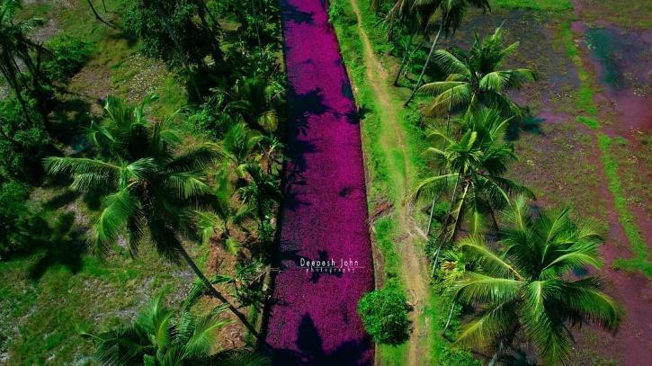 Dòng sông 'hồng' đầy mộng mơ ở ngôi làng Kerala Ảnh 1