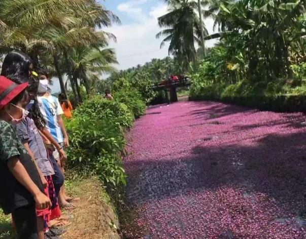 Dòng sông 'hồng' đầy mộng mơ ở ngôi làng Kerala Ảnh 2