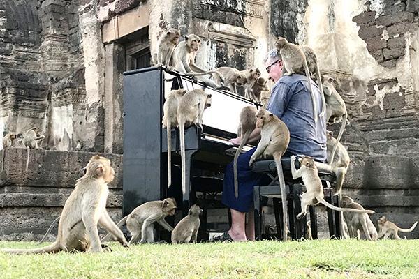 Tổ chức hòa nhạc piano cho khỉ ở Thái Lan Ảnh 1