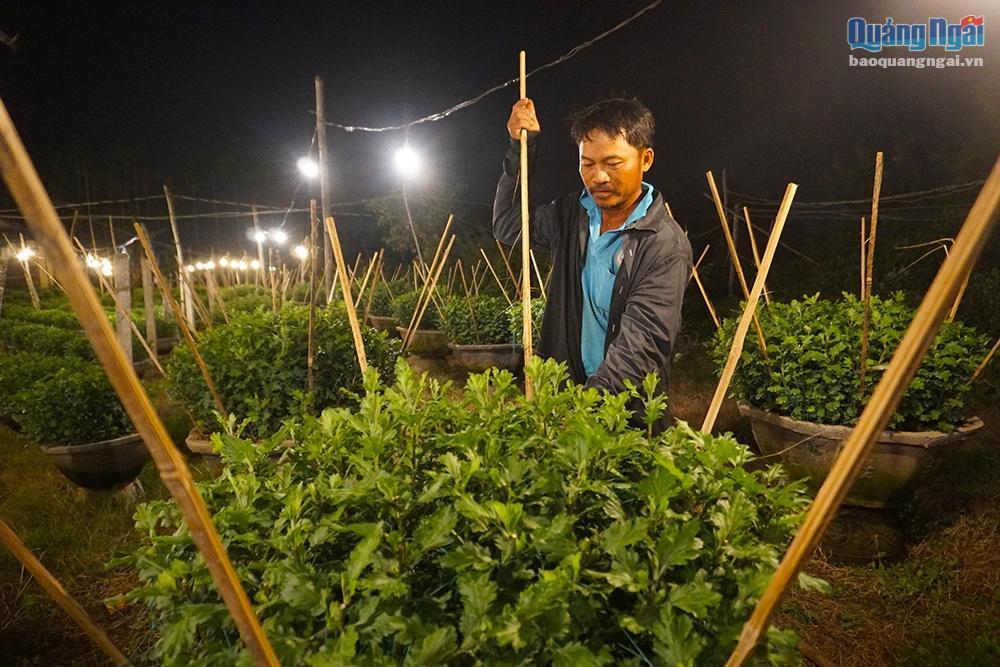Chong đèn cho hoa Tết Ảnh 4