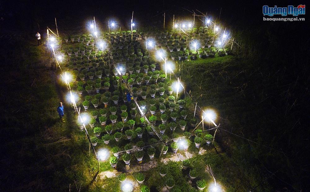 Chong đèn cho hoa Tết Ảnh 5