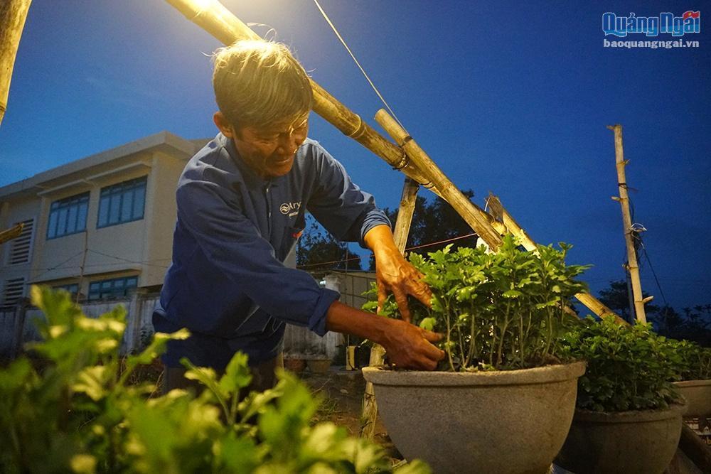 Chong đèn cho hoa Tết Ảnh 6