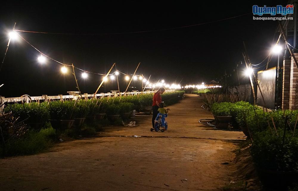 Chong đèn cho hoa Tết Ảnh 10