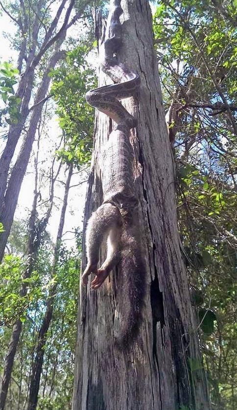 Ngồi dưới gốc cây thì nghe thấy 'tiếng nuốt' trên đầu, người phụ nữ kinh sợ trước cảnh tượng bắt gặp Ảnh 2