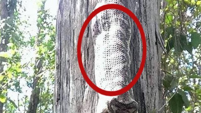 Ngồi dưới gốc cây thì nghe thấy 'tiếng nuốt' trên đầu, người phụ nữ kinh sợ trước cảnh tượng bắt gặp Ảnh 1