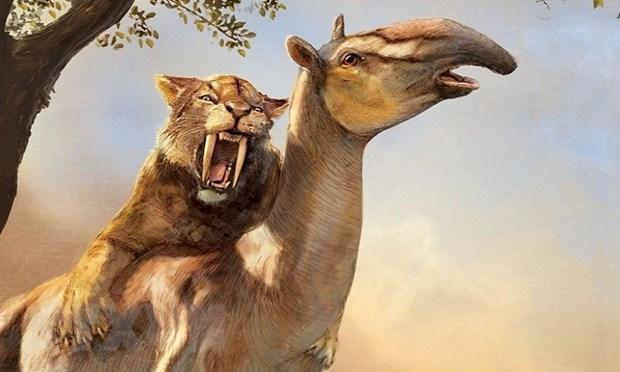 Bán đấu giá bộ xương hổ răng kiếm hóa thạch gần 40 triệu năm tuổi Ảnh 1
