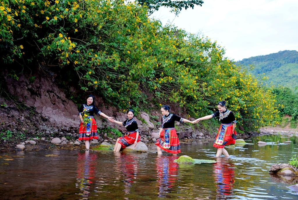 Hoa Dã quỳ nhuộm vàng núi rừng Điện Biên Ảnh 5
