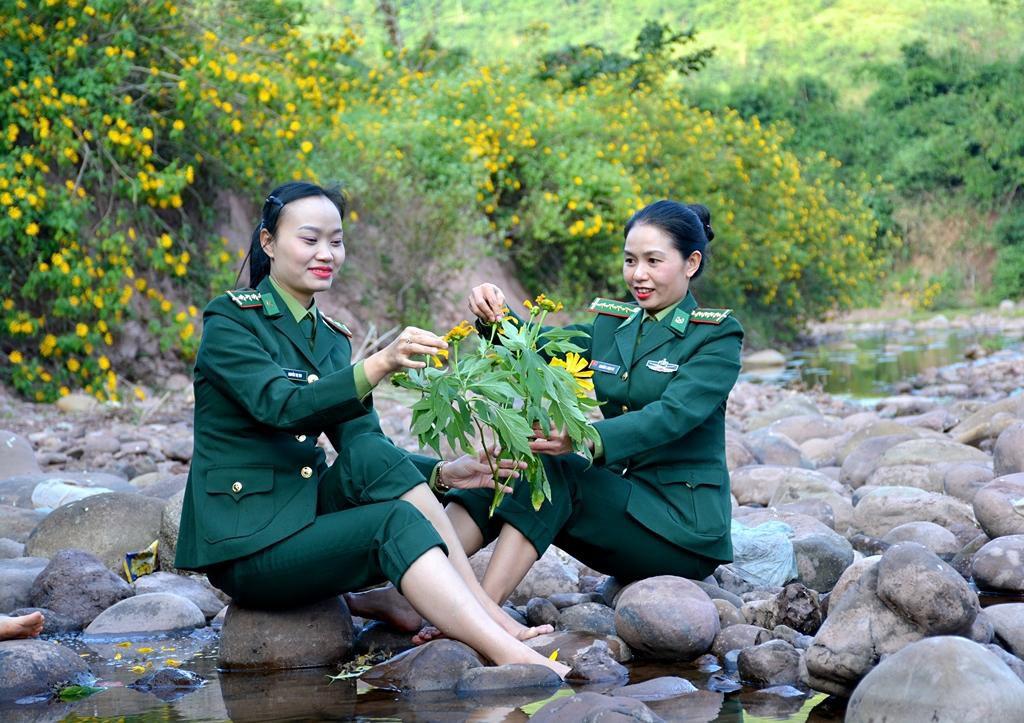 Hoa Dã quỳ nhuộm vàng núi rừng Điện Biên Ảnh 7