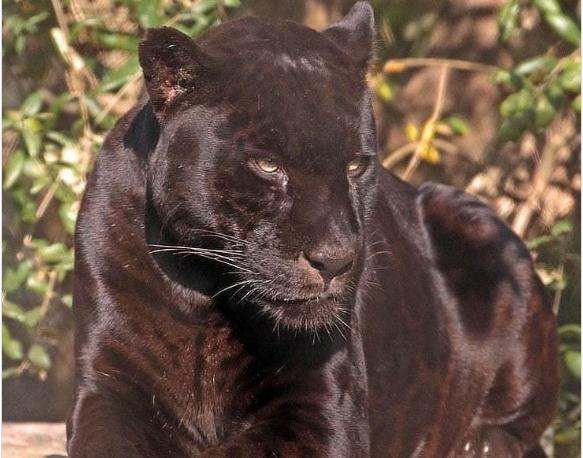 Kỳ lạ 15 loài động vật 'tuyệt đẹp' dễ thương Ảnh 11
