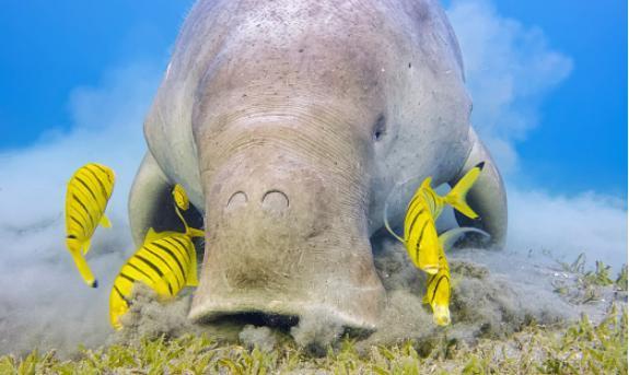 Kỳ lạ 15 loài động vật 'tuyệt đẹp' dễ thương Ảnh 9