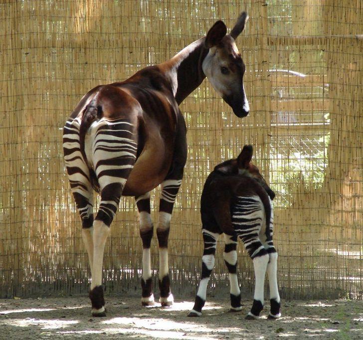 Kỳ lạ 15 loài động vật 'tuyệt đẹp' dễ thương Ảnh 1