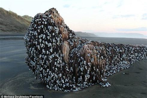 'Quái vật biển' bất ngờ dạt vào bờ ở New Zealand Ảnh 1