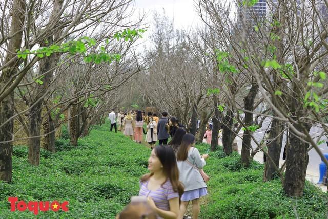 Giới trẻ hào hứng 'check-in' hàng cây rụng lá đẹp như tranh vẽ ở Đà Nẵng Ảnh 2