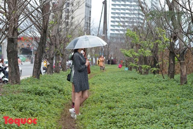 Giới trẻ hào hứng 'check-in' hàng cây rụng lá đẹp như tranh vẽ ở Đà Nẵng Ảnh 9