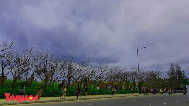 Giới trẻ hào hứng 'check-in' hàng cây rụng lá đẹp như tranh vẽ ở Đà Nẵng Ảnh 1