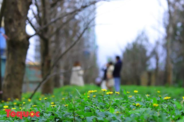 Giới trẻ hào hứng 'check-in' hàng cây rụng lá đẹp như tranh vẽ ở Đà Nẵng Ảnh 7
