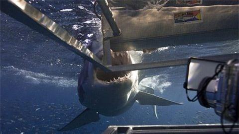 Bên trong hàm cá mập có gì? Ảnh 2