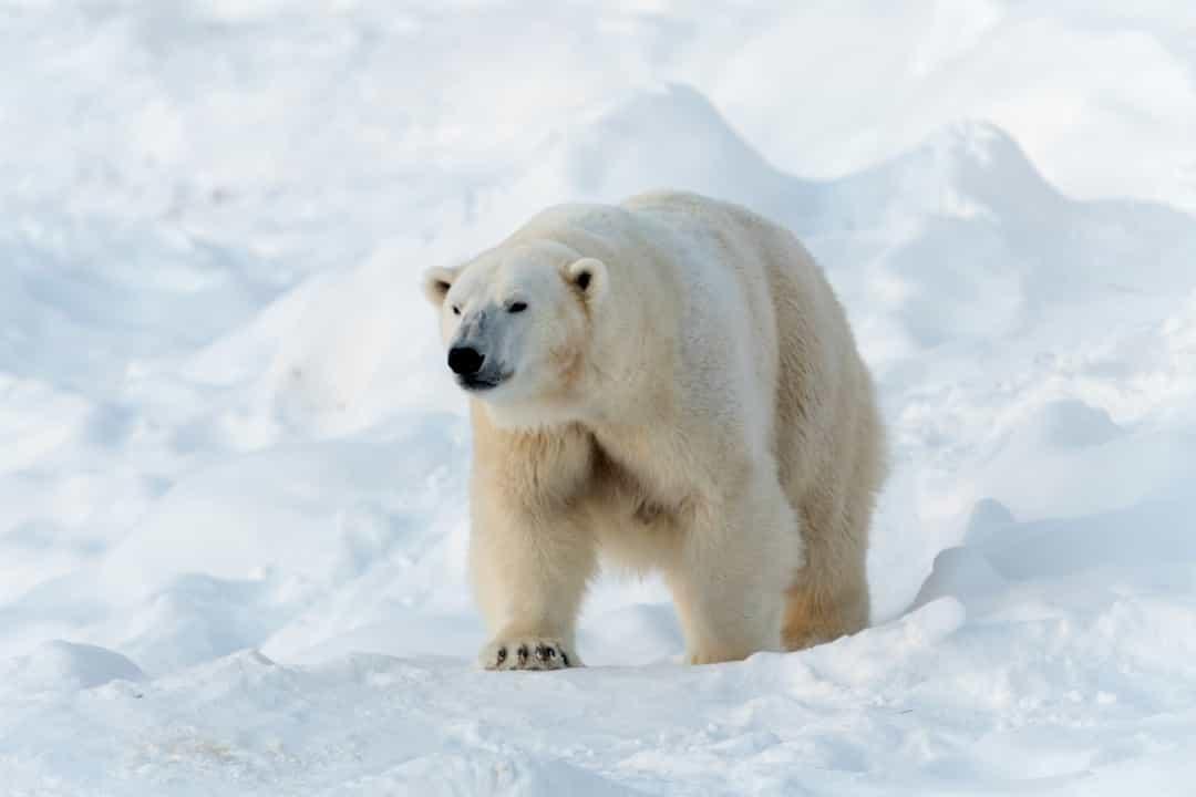 Ghé thăm xứ sở thần tiên Lapland – Quê hương ông già Noel Ảnh 20