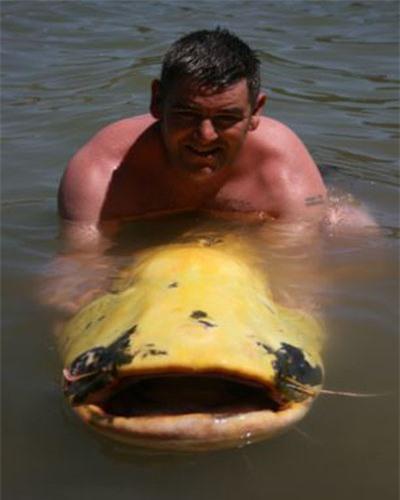 Bắt được cá trê bạch tạng gần 90 kg Ảnh 2