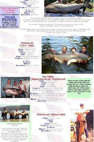 Bắt được cá trê bạch tạng gần 90 kg Ảnh 3