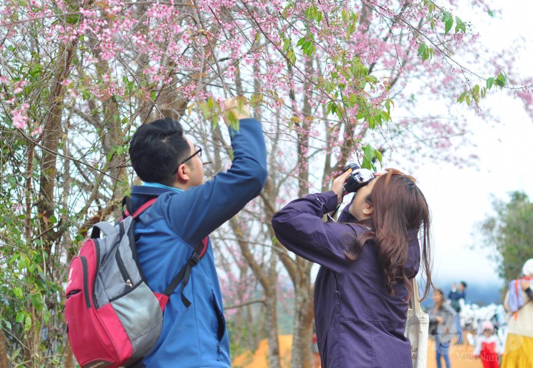 Tết dương lịch, du khách ùn ùn lên núi Langbiang ngắm mai anh đào Ảnh 7