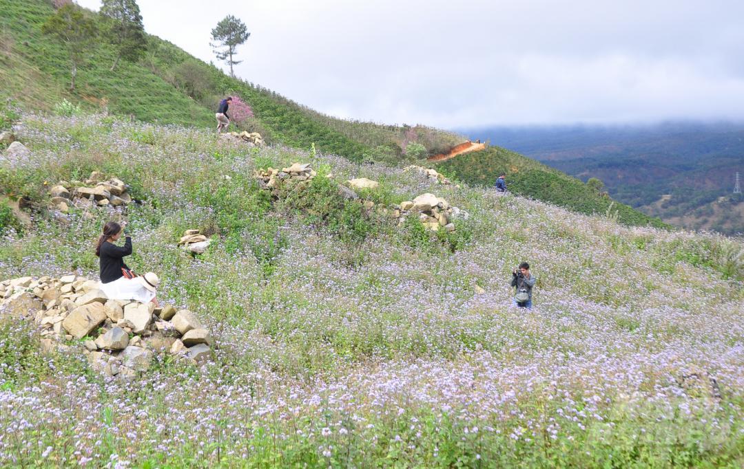Tết dương lịch, du khách ùn ùn lên núi Langbiang ngắm mai anh đào Ảnh 10