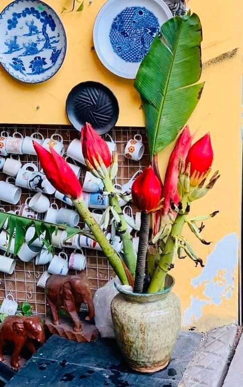 Dân công sở rủ nhau mua hoa chuối rừng về chơi Tết Ảnh 2