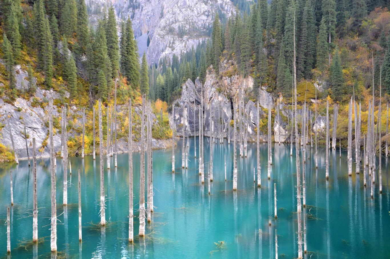 Hồ nước có rừng cây mọc ngược từ dưới đáy Ảnh 6