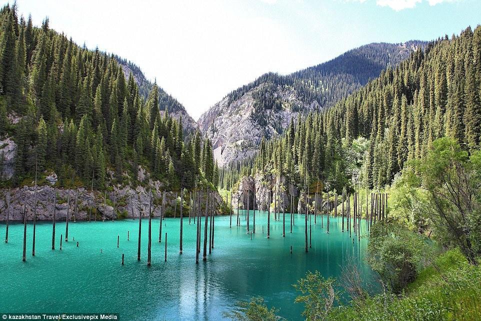Hồ nước có rừng cây mọc ngược từ dưới đáy Ảnh 1