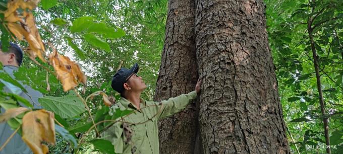 Chiêm ngưỡng hàng ngàn cây Lim xanh ở rừng Sông Móng – Capét Ảnh 2