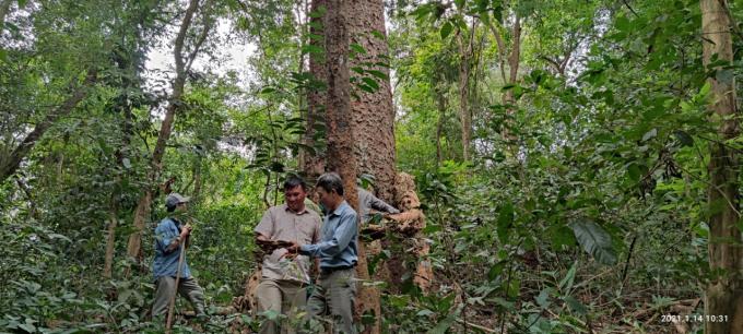 Chiêm ngưỡng hàng ngàn cây Lim xanh ở rừng Sông Móng – Capét Ảnh 9
