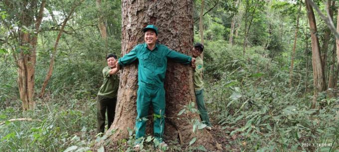 Chiêm ngưỡng hàng ngàn cây Lim xanh ở rừng Sông Móng – Capét Ảnh 10