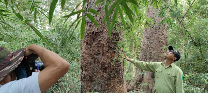 Chiêm ngưỡng hàng ngàn cây Lim xanh ở rừng Sông Móng – Capét Ảnh 5
