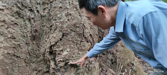 Chiêm ngưỡng hàng ngàn cây Lim xanh ở rừng Sông Móng – Capét Ảnh 7
