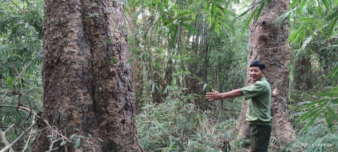 Chiêm ngưỡng hàng ngàn cây Lim xanh ở rừng Sông Móng – Capét Ảnh 8