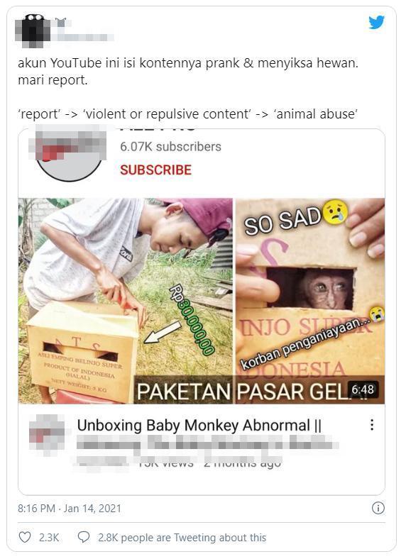 Youtuber khiến dư luận phẫn nộ vì ép khỉ ăn ớt, uống Bò Húc câu view Ảnh 1