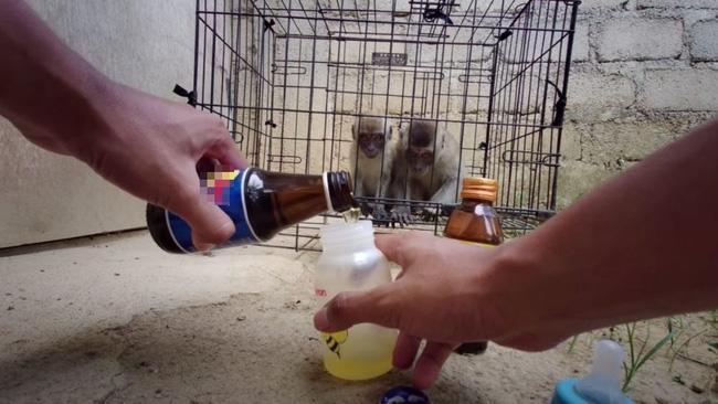 Youtuber khiến dư luận phẫn nộ vì ép khỉ ăn ớt, uống Bò Húc câu view Ảnh 2