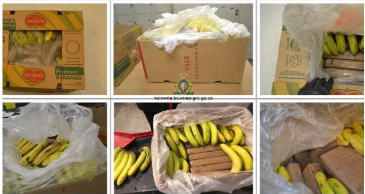 21 bánh cocaine giấu trong thùng chuối bị chuyển nhầm đến hiệu tạp hóa Ảnh 1