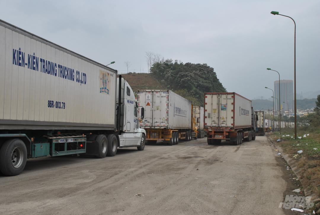 Xe thùng rỗng vây cửa khẩu Kim Thành Ảnh 7