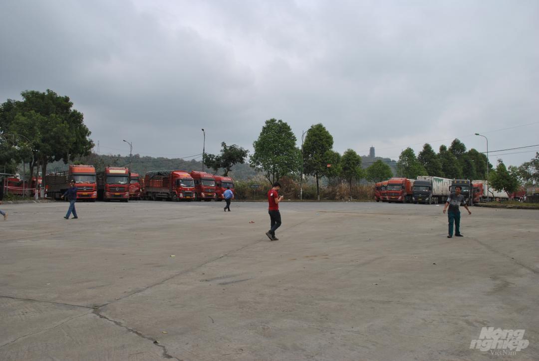 Xe thùng rỗng vây cửa khẩu Kim Thành Ảnh 6