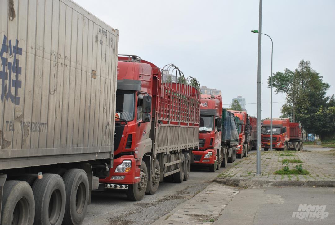 Xe thùng rỗng vây cửa khẩu Kim Thành Ảnh 4