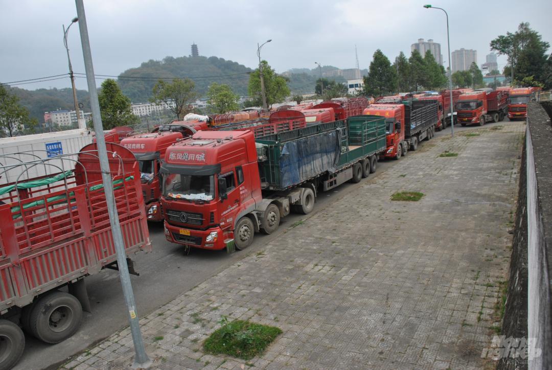 Xe thùng rỗng vây cửa khẩu Kim Thành Ảnh 1