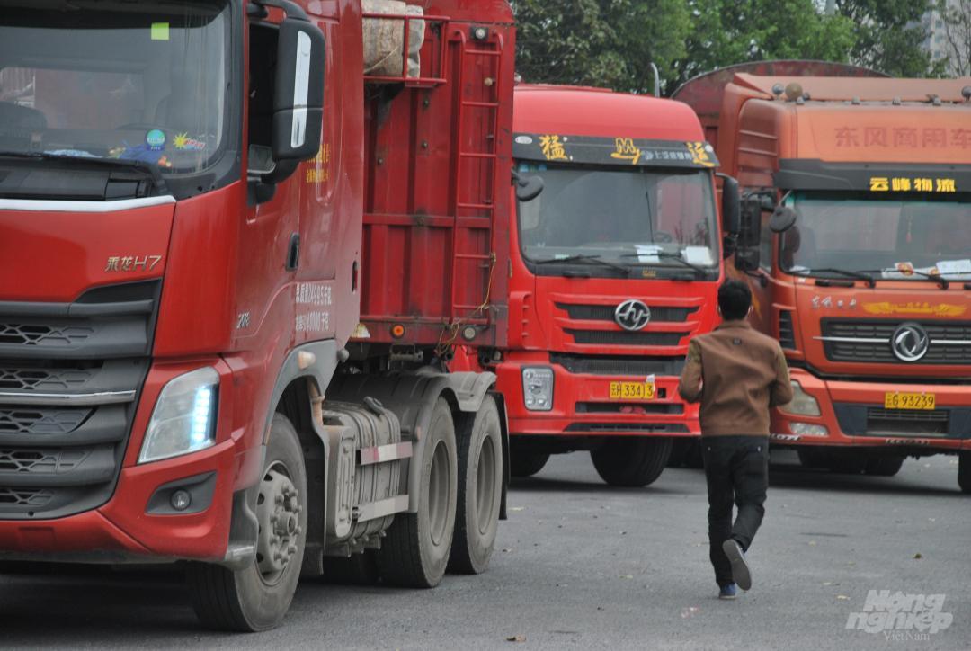 Xe thùng rỗng vây cửa khẩu Kim Thành Ảnh 11