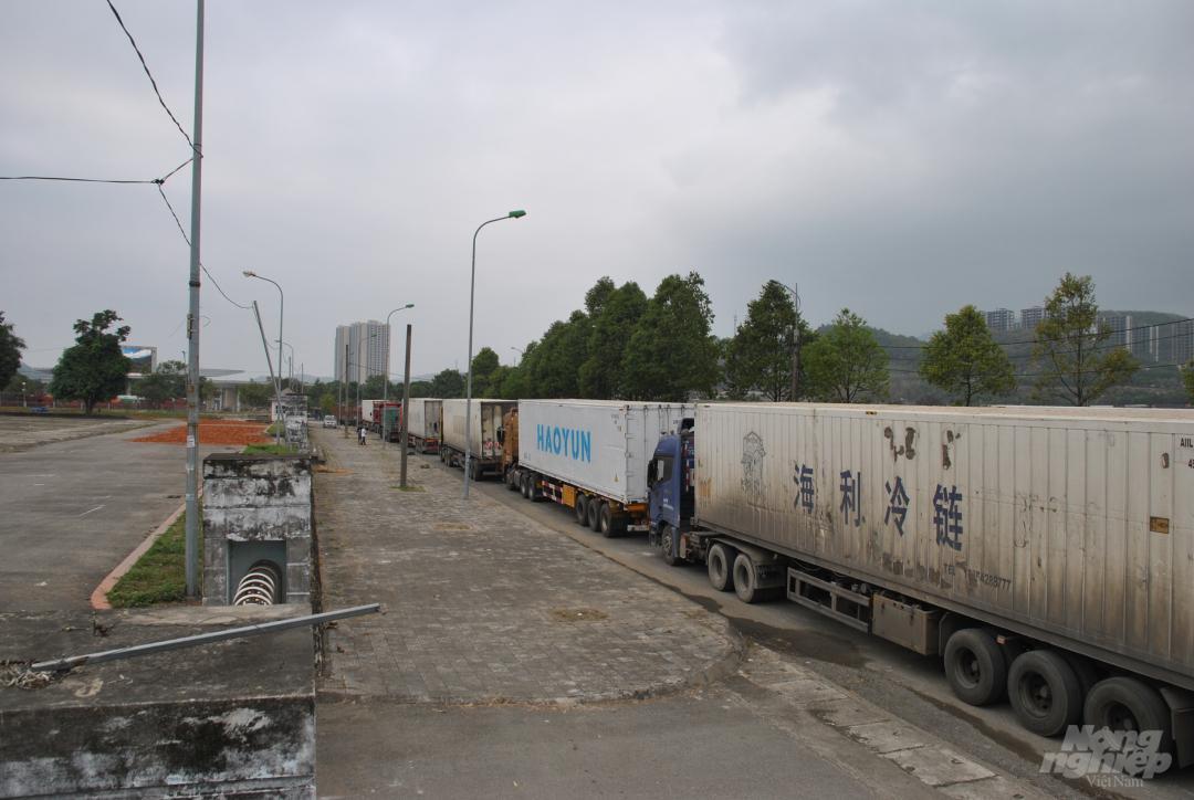 Xe thùng rỗng vây cửa khẩu Kim Thành Ảnh 8
