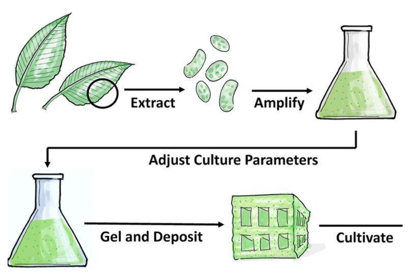 'Gỗ nhân tạo' đang trong quá trình hoàn thiện, tương lai sẽ không phải chặt phá rừng Ảnh 2