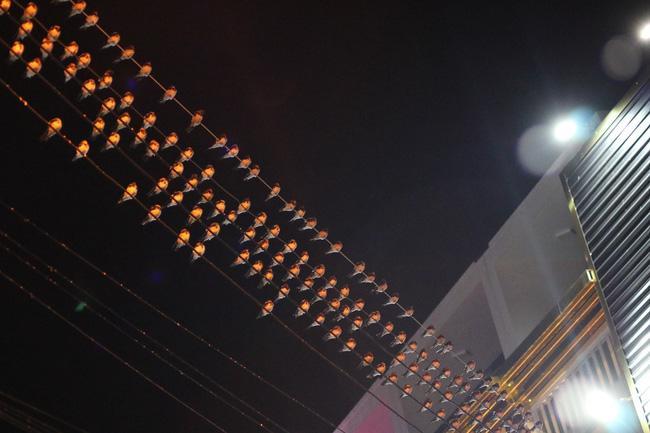 Tiền Giang: Chim én đậu kín giữa khu dân cư Ảnh 2